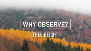 Link to Recent Story entitled: GLOBE Observer Why Observe?: Tree Height